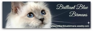 Brilliant Blue Birmans