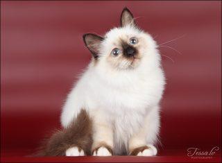 Bridget Sweet Katicat