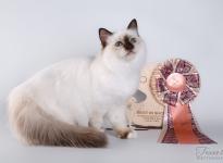 Mercedes Sweet Katicat 2017