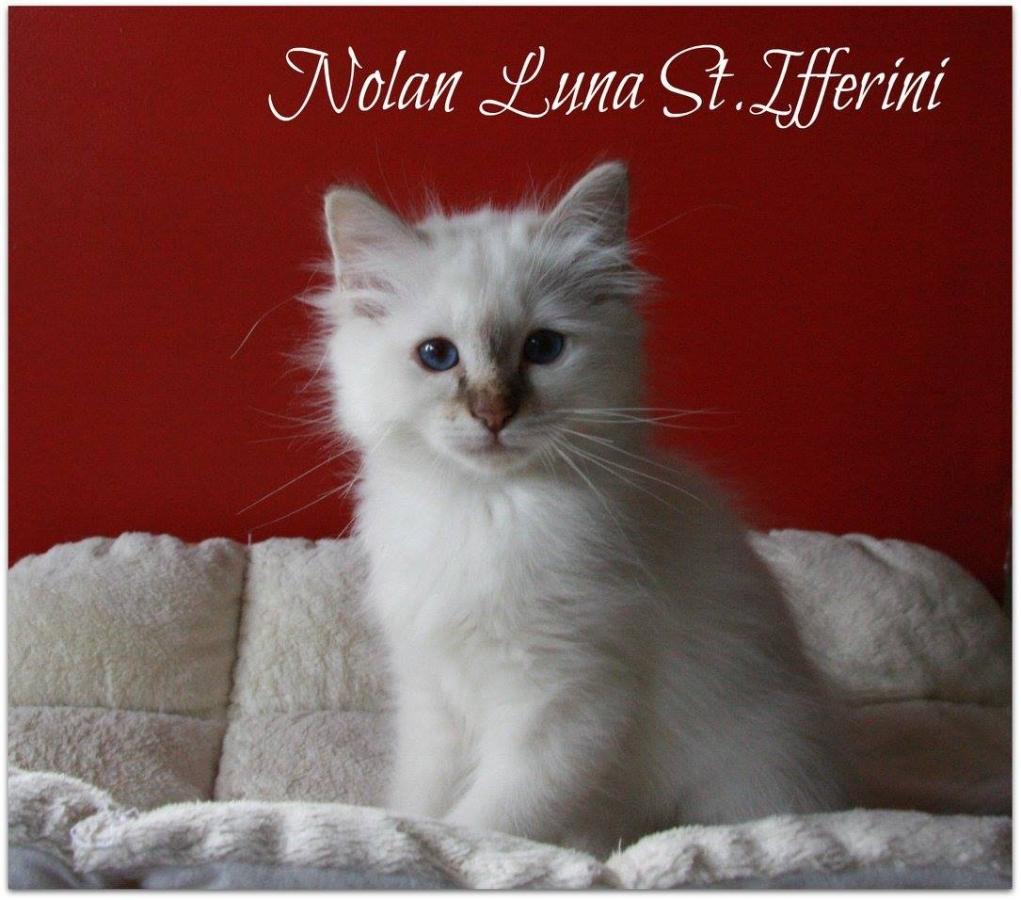 Nolan Luna St.Ifferini