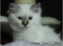 Laramy Hero St.Ifferini