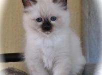 Benjamin Sweet Katicat