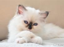 Demi Sweet Katicat