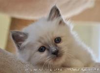 Loved-Elmo Sweet Katicat