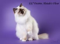 Desiree_2O8A2251.jpg