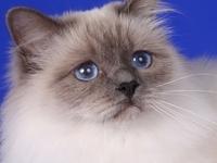 Isabella Sweet Katicat