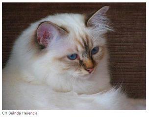 Belinda Herencia