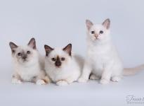 NemoSun, Mercedes ja NellaDella Sweet Katicat 2017