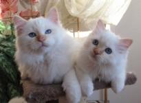Leopold ja Marygold