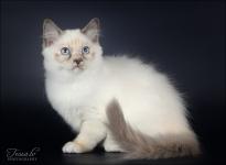 Bella Blue Ly Khaleesi
