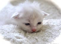 Darlina Sweet Katicat