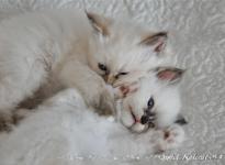 Sweet Katicat Deena ja Demi